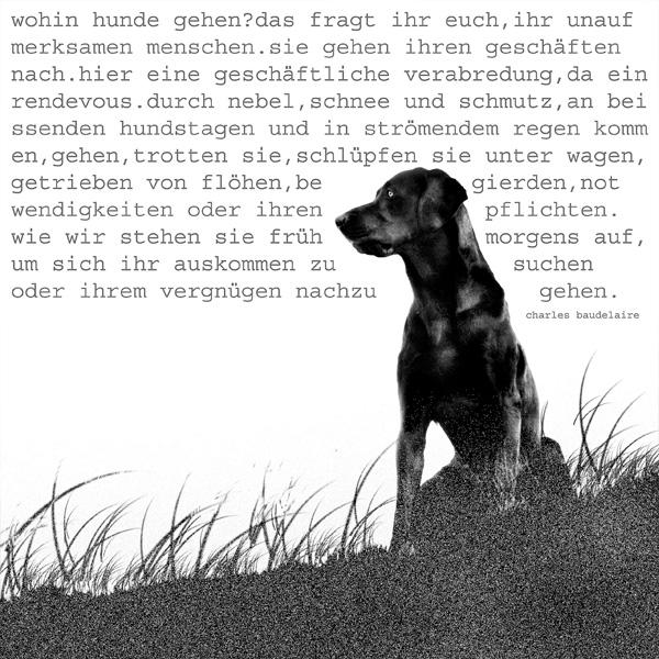 Home_Hundekunst
